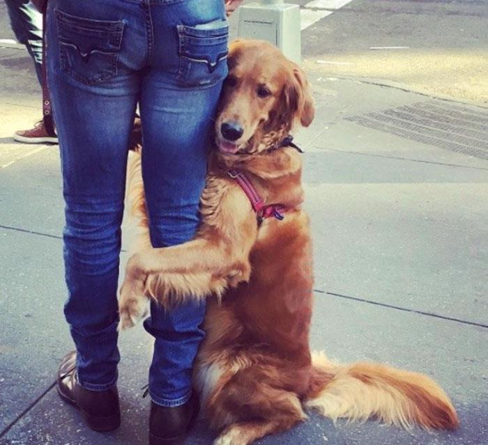dog gives hugs louboutina retriever new york 6 - Este Retriever amou abraçar e está obcecado em abraços