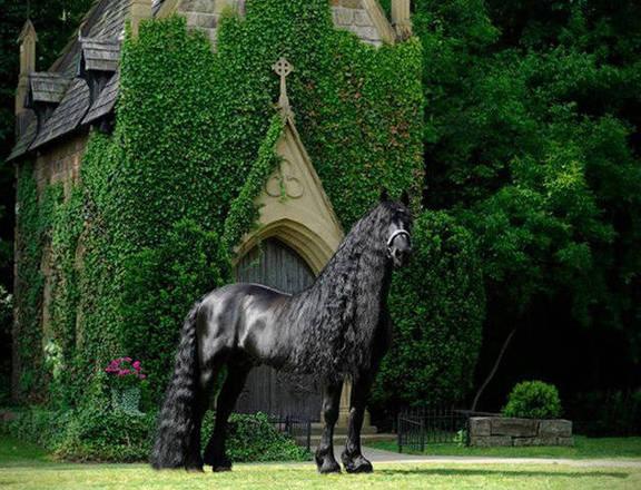 hypeness 16042020185808447 - O cavalo mais bonito do mundo chamou a atenção de todos nas redes sociais