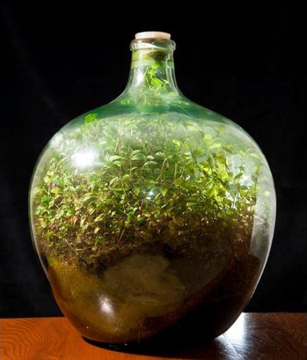 jardim garrafa 4 - Em 1972 esse homem fez jardim em garrafa e sem receber água permanece saudável e auto-suficiente