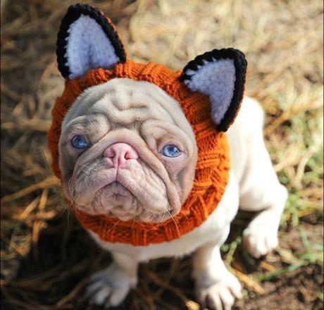 pug milkshake 01042020123701430 - Esse é o Milkshake, um pug albino com olhos azuis e pelo rosa que viralizou pela internet