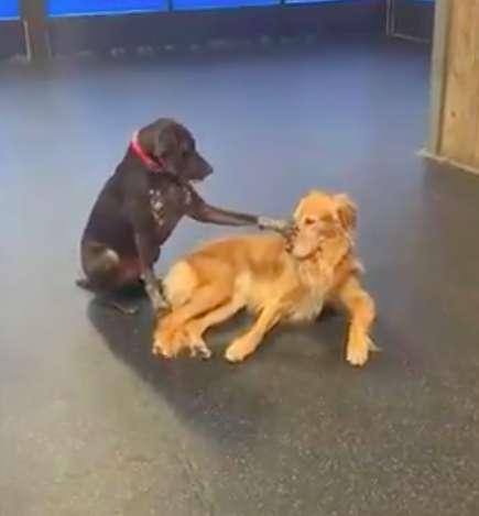 tmg article tall - Cachorro insiste em acariciar todos os cães em sua creche