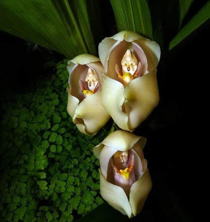 1 17 - Flores que parecem ter 'bebês dentro' são fantásticas obras da natureza