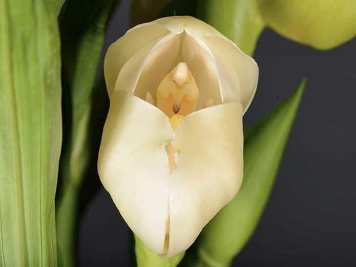 3 21 - Flores que parecem ter 'bebês dentro' são fantásticas obras da natureza