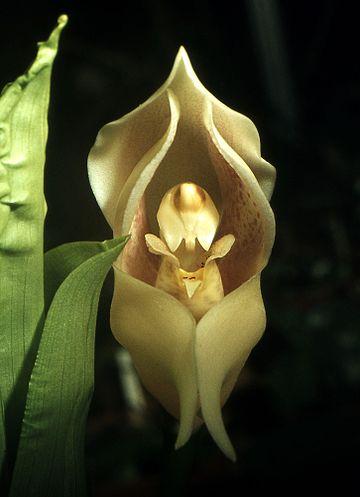 4 21 - Flores que parecem ter 'bebês dentro' são fantásticas obras da natureza