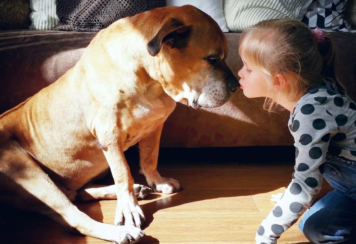 lynn y jaden perro fiel triste 5 - Com apenas 6 anos, menina fica com seu cão idoso até seu último suspiro
