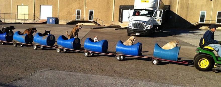 rescued dog train tractor stray eugene bostick 1 - Com seus 80 anos, ele decidiu construir um trem capaz de resgatar vários cães de rua e levá-los em uma aventura