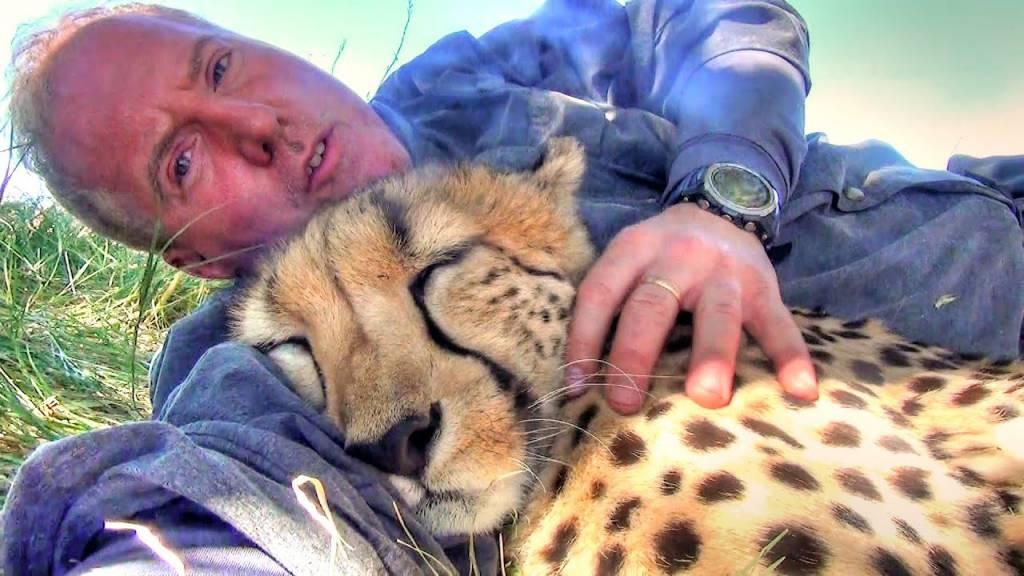 3 27 1024x576 1 - Cheetah encontra fotógrafo cochilando embaixo de uma árvore e se junta a ele