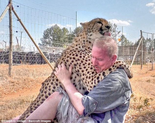 4 28 - Cheetah encontra fotógrafo cochilando embaixo de uma árvore e se junta a ele