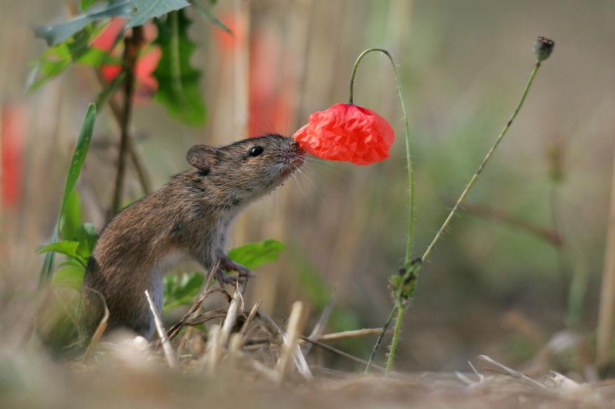 63 - Esses animais encantados com flores são as coisas mais fofas que você verá hoje
