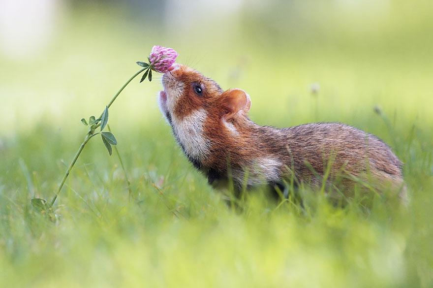 animals smelling flowers 191 880 - Esses animais encantados com flores são as coisas mais fofas que você verá hoje