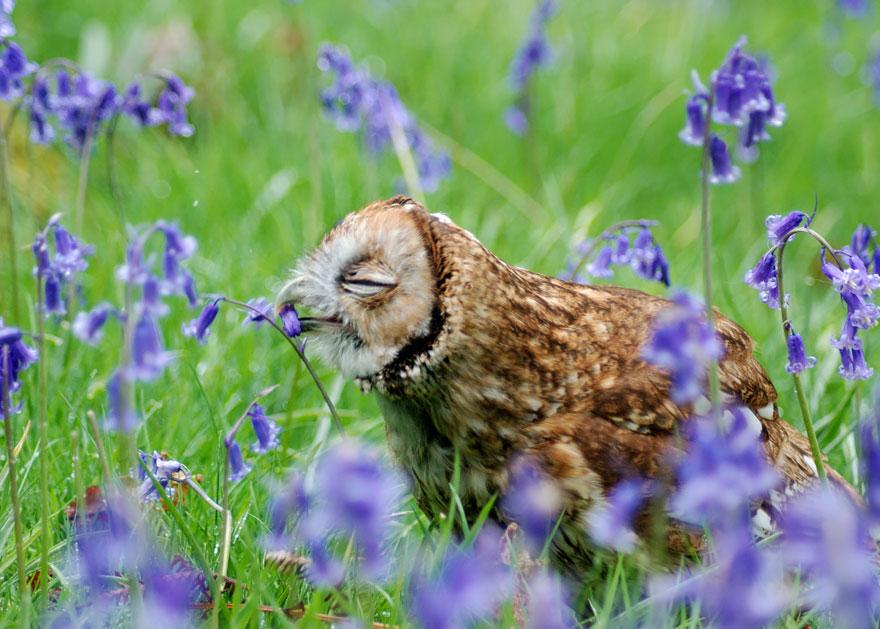 animals smelling flowers 26 880 - Esses animais encantados com flores são as coisas mais fofas que você verá hoje