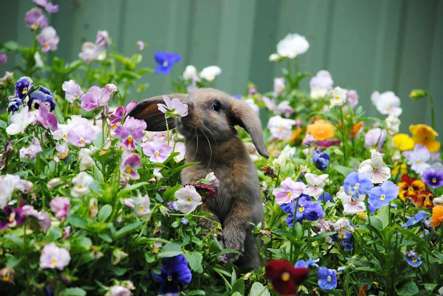 animals smelling flowers 27 880 - Esses animais encantados com flores são as coisas mais fofas que você verá hoje