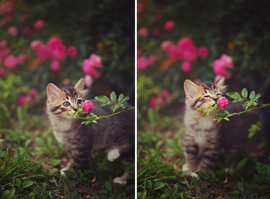 animals smelling flowers 28 880 - Esses animais encantados com flores são as coisas mais fofas que você verá hoje