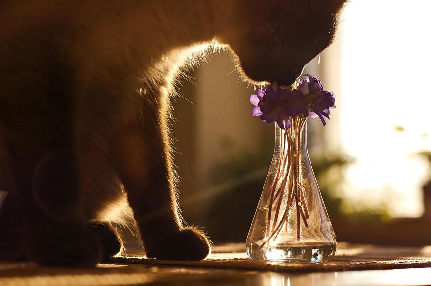 animals smelling flowers 30 880 - Esses animais encantados com flores são as coisas mais fofas que você verá hoje
