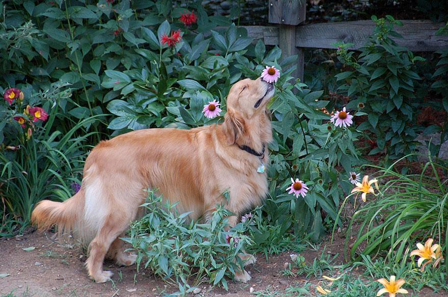 animals smelling flowers 371 880 - Esses animais encantados com flores são as coisas mais fofas que você verá hoje