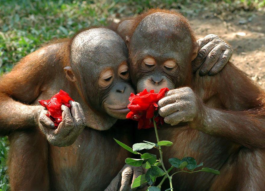 animals smelling flowers 37 880 - Esses animais encantados com flores são as coisas mais fofas que você verá hoje