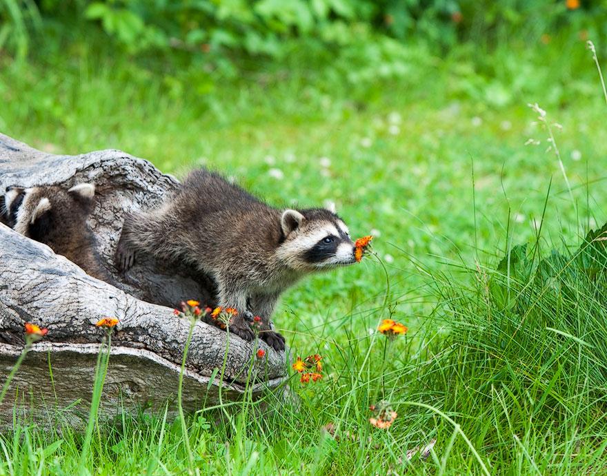 animals smelling flowers 401 880 - Esses animais encantados com flores são as coisas mais fofas que você verá hoje