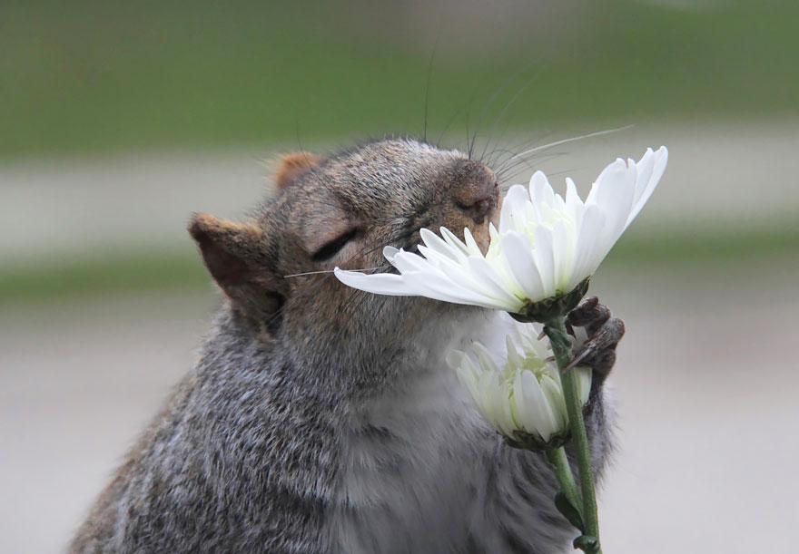 animals smelling flowers 42 880 - Esses animais encantados com flores são as coisas mais fofas que você verá hoje