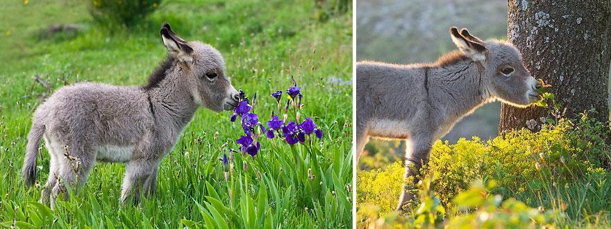 animals smelling flowers 7 880 - Esses animais encantados com flores são as coisas mais fofas que você verá hoje