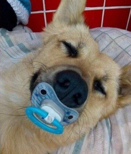 b 3 - Cachorro de moradores de rua ficam famosos após dormir com chupeta na boca