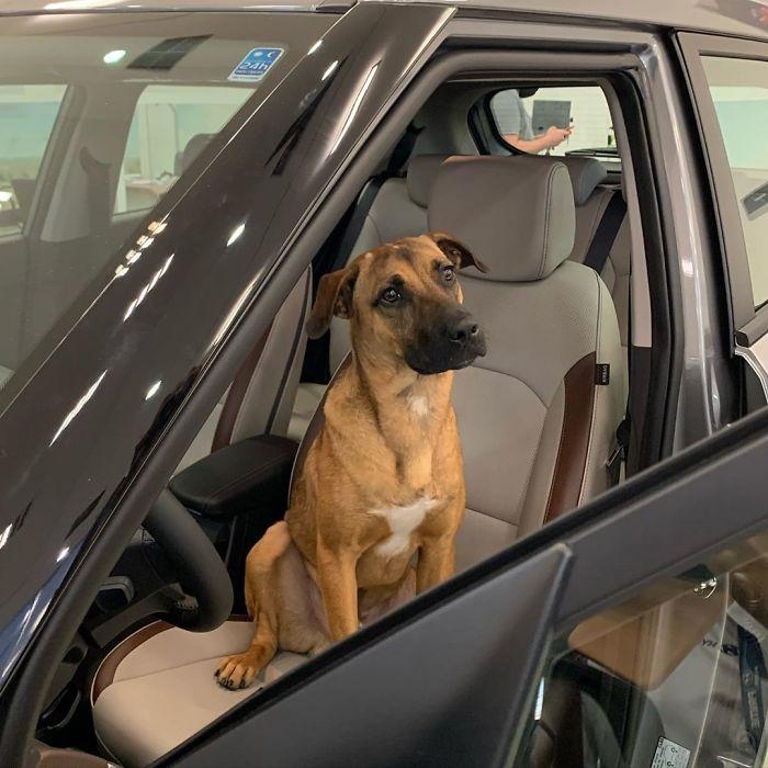 CDdxXoJnuOo png 700 - Após varias visitas a Hyundai, cachorro de rua se torna empregado e recebe seu próprio crachá