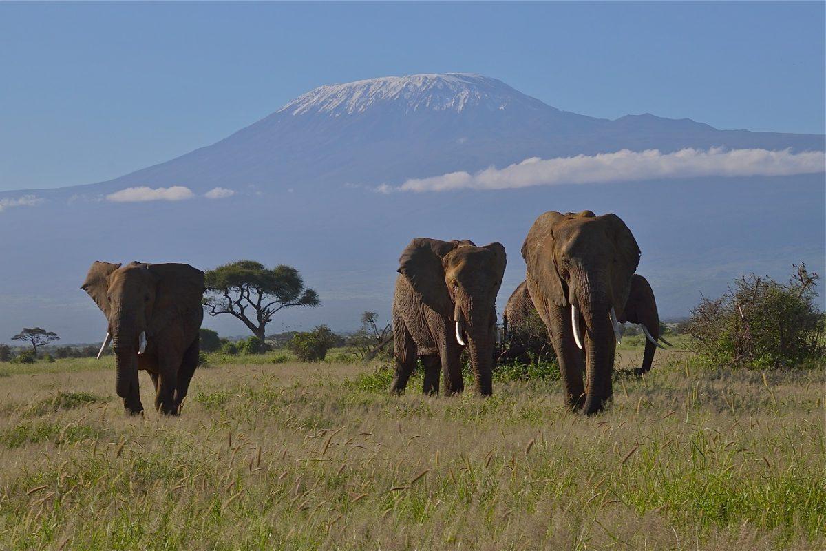 Elefantes 2 scaled - Esperança! Baby boom de elefantes no Quênia impressiona especialistas no mundo todo