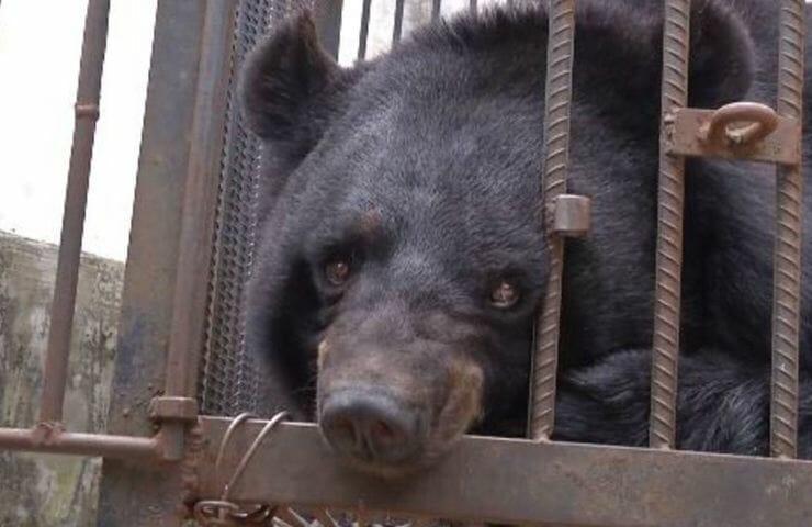 ursopovo - Depois de 2 anos, chinesa percebe que o cachorrinho que adotou, na verdade era um urso