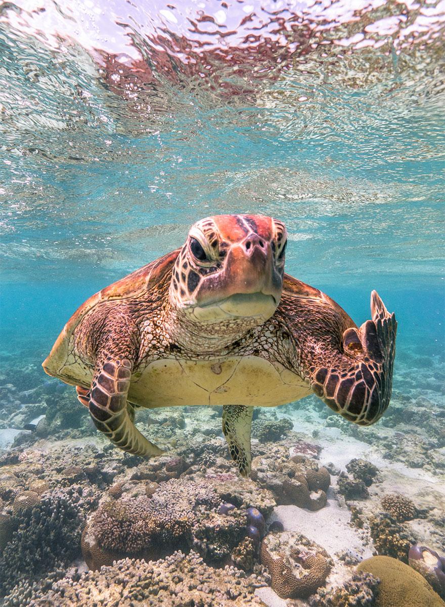 animais1 - Finalistas do Prêmio de Fotografia de Vida Selvagem de Comédia são anunciados e as fotos são surpreendentes