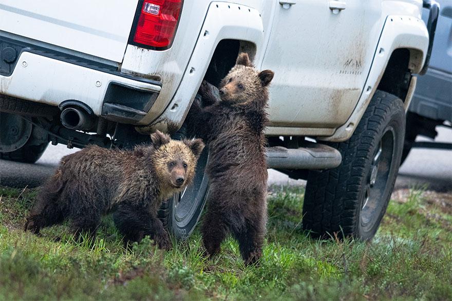 animais10 - Finalistas do Prêmio de Fotografia de Vida Selvagem de Comédia são anunciados e as fotos são surpreendentes