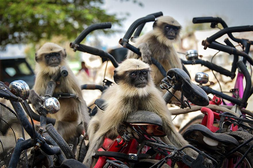 animais11 - Finalistas do Prêmio de Fotografia de Vida Selvagem de Comédia são anunciados e as fotos são surpreendentes
