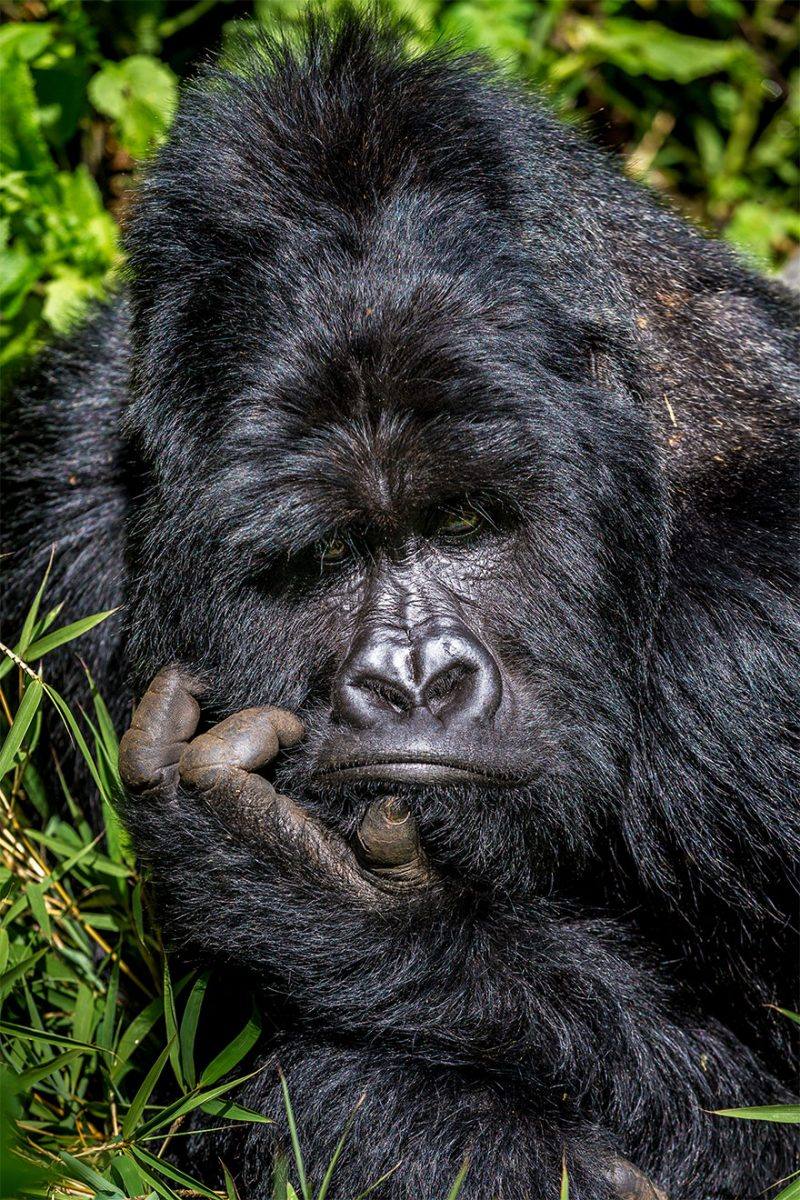 animais12 scaled - Finalistas do Prêmio de Fotografia de Vida Selvagem de Comédia são anunciados e as fotos são surpreendentes