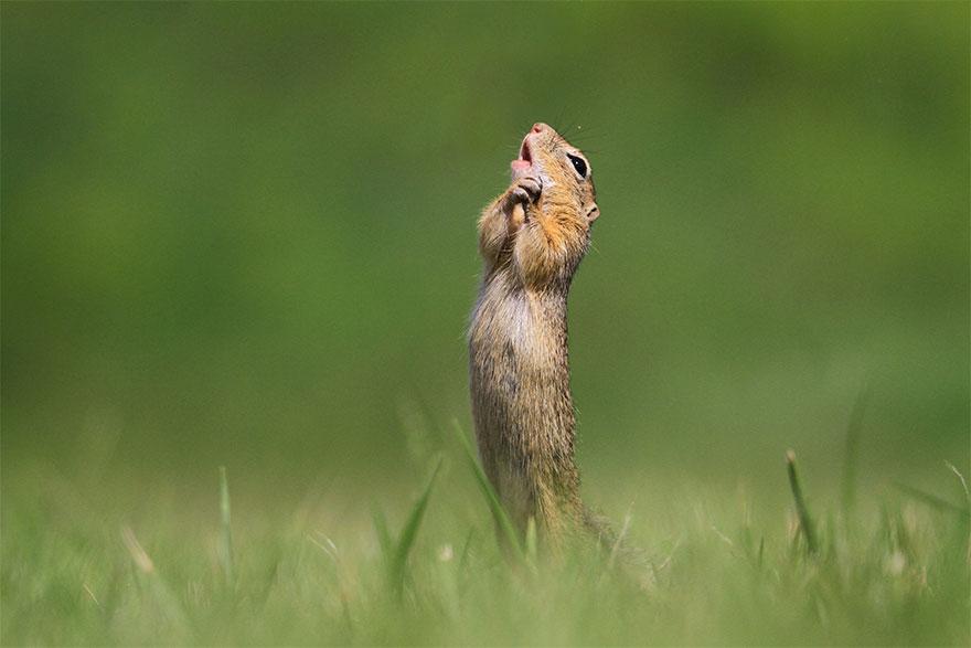 animais13 - Finalistas do Prêmio de Fotografia de Vida Selvagem de Comédia são anunciados e as fotos são surpreendentes