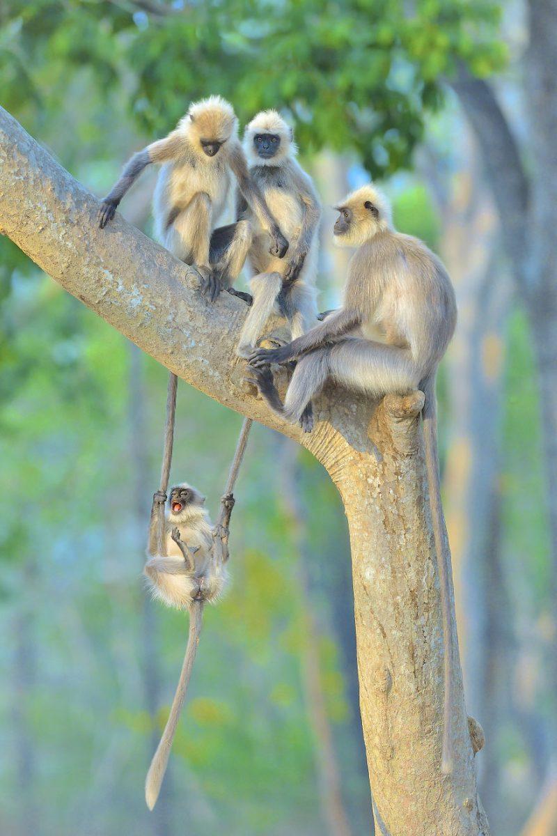 animais15 scaled - Finalistas do Prêmio de Fotografia de Vida Selvagem de Comédia são anunciados e as fotos são surpreendentes