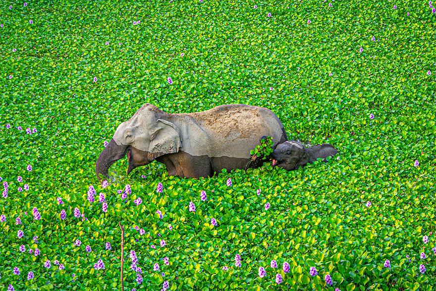 animais3 - Finalistas do Prêmio de Fotografia de Vida Selvagem de Comédia são anunciados e as fotos são surpreendentes