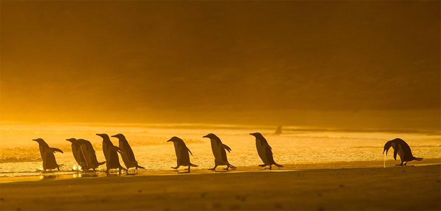 animais5 - Finalistas do Prêmio de Fotografia de Vida Selvagem de Comédia são anunciados e as fotos são surpreendentes