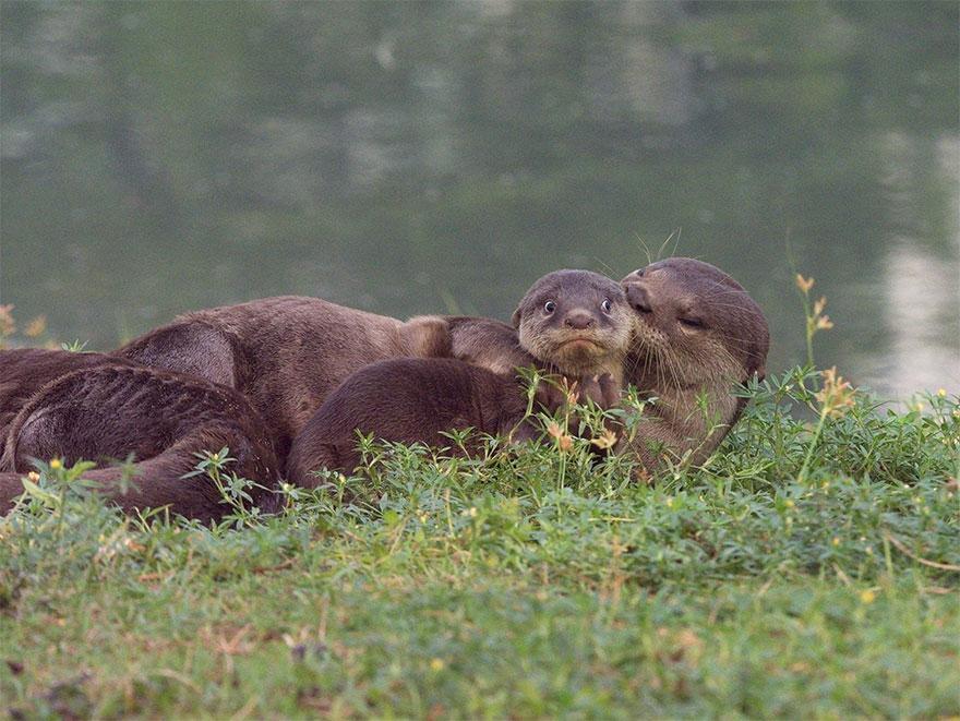 animais6 - Finalistas do Prêmio de Fotografia de Vida Selvagem de Comédia são anunciados e as fotos são surpreendentes