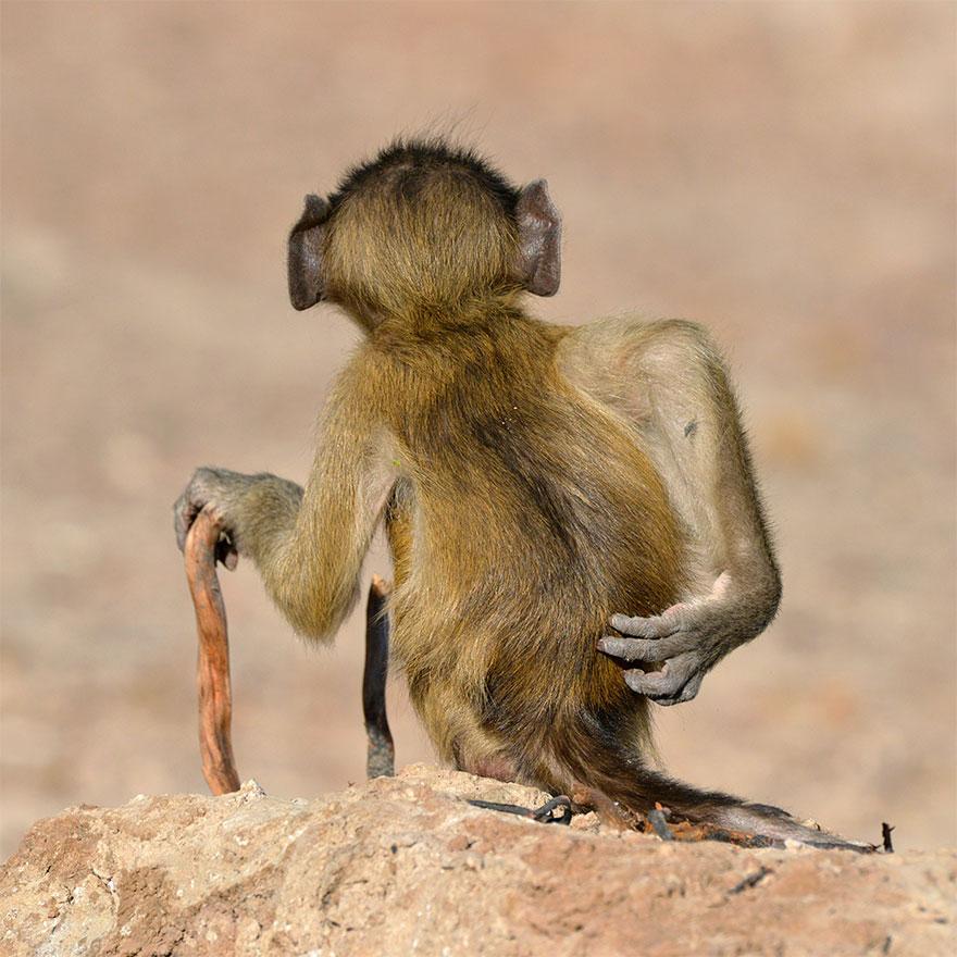 animais7 - Finalistas do Prêmio de Fotografia de Vida Selvagem de Comédia são anunciados e as fotos são surpreendentes