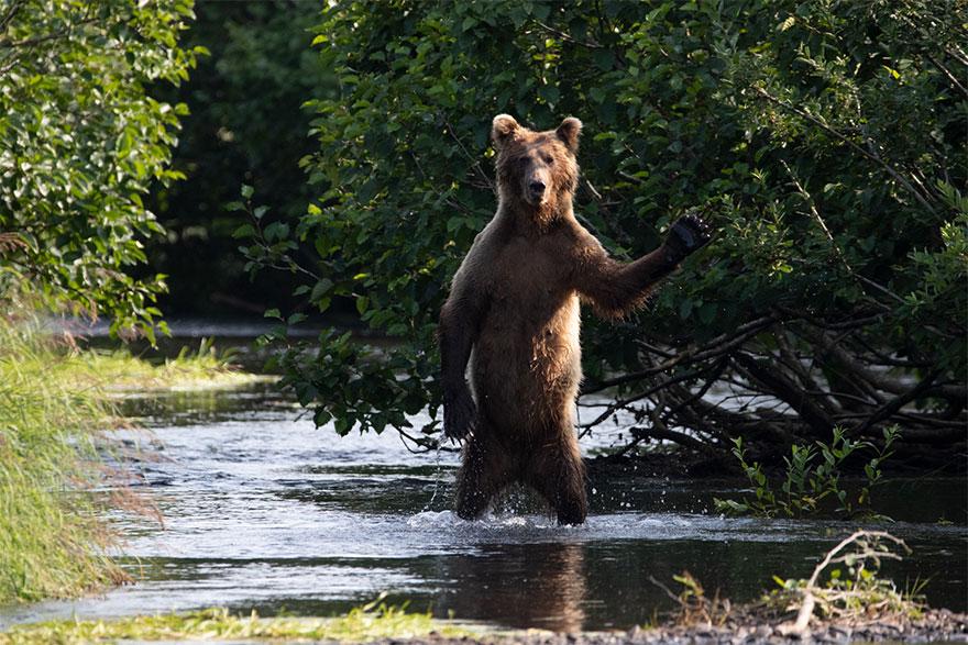 animais8 - Finalistas do Prêmio de Fotografia de Vida Selvagem de Comédia são anunciados e as fotos são surpreendentes