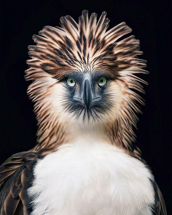 Bdh TSjgEXo png 700 - Aqui estão 10 incríveis pássaros raros ameaçados de extinção