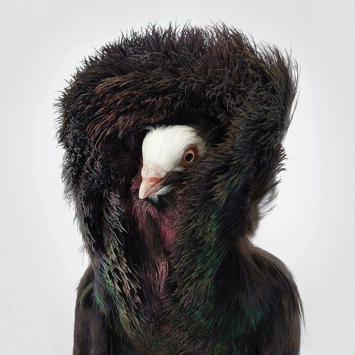 BgGbD4FgprC png 700 - Aqui estão 10 incríveis pássaros raros ameaçados de extinção