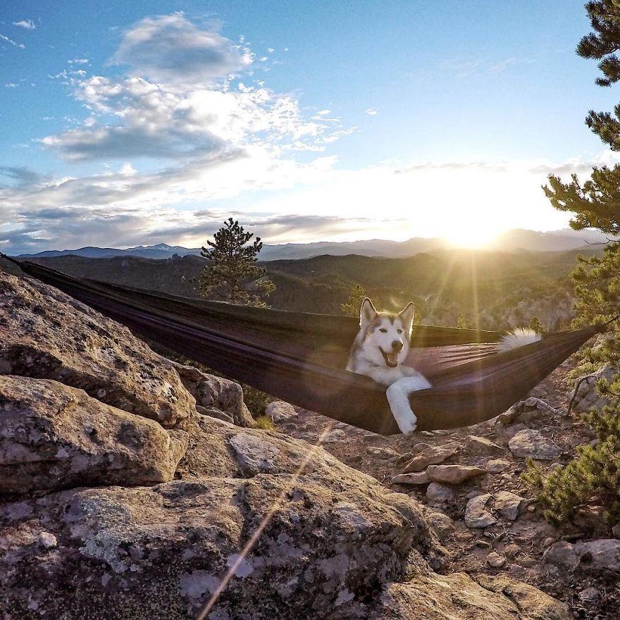"""Loki the Wolfdog10 880 - """"Eu levo meu cão-lobo em aventuras épicas porque eu odeio ver cães presos"""""""