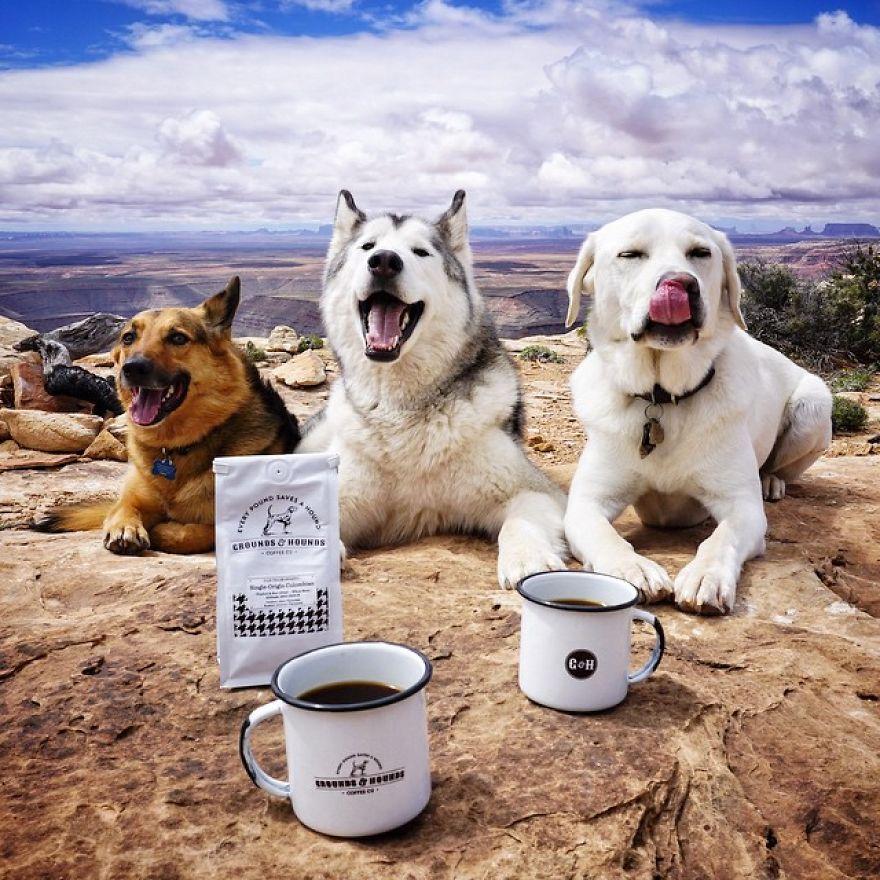 """Loki the Wolfdog12 880 - """"Eu levo meu cão-lobo em aventuras épicas porque eu odeio ver cães presos"""""""