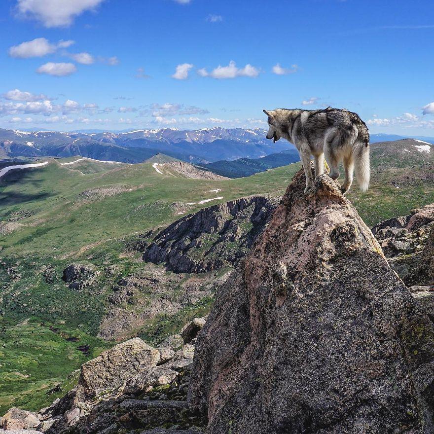 """Loki the Wolfdog14 880 - """"Eu levo meu cão-lobo em aventuras épicas porque eu odeio ver cães presos"""""""
