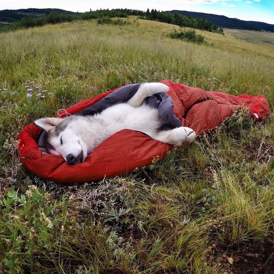 """Loki the Wolfdog2 880 - """"Eu levo meu cão-lobo em aventuras épicas porque eu odeio ver cães presos"""""""