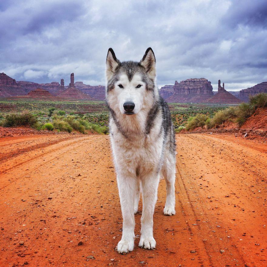 """Loki the Wolfdog4 880 - """"Eu levo meu cão-lobo em aventuras épicas porque eu odeio ver cães presos"""""""