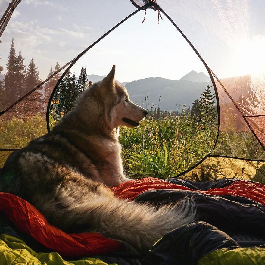 """Loki the Wolfdog50 880 - """"Eu levo meu cão-lobo em aventuras épicas porque eu odeio ver cães presos"""""""