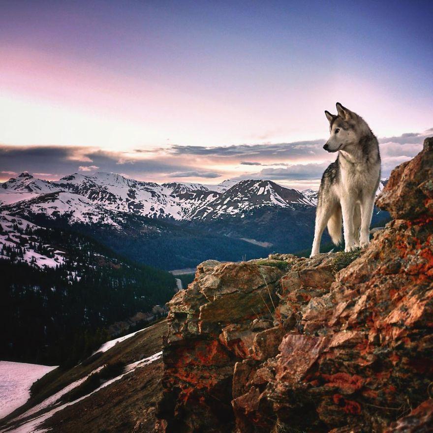 """Loki the Wolfdog7 880 - """"Eu levo meu cão-lobo em aventuras épicas porque eu odeio ver cães presos"""""""