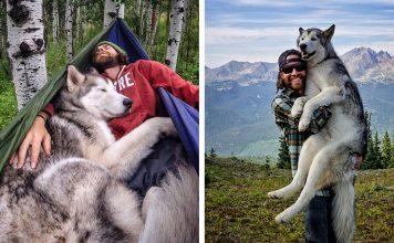 dog photography husky wolf malamute gopro loki fb 356x220 - Inicio