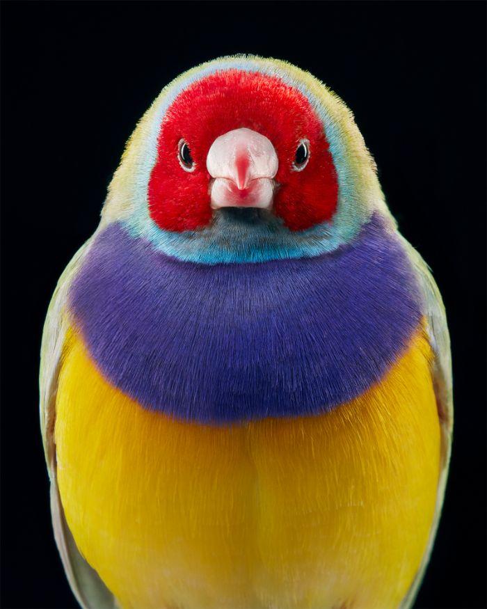 endangered photo portraits birds tim flach 1 3 5fae3a5700ba6 700 - Aqui estão 10 incríveis pássaros raros ameaçados de extinção