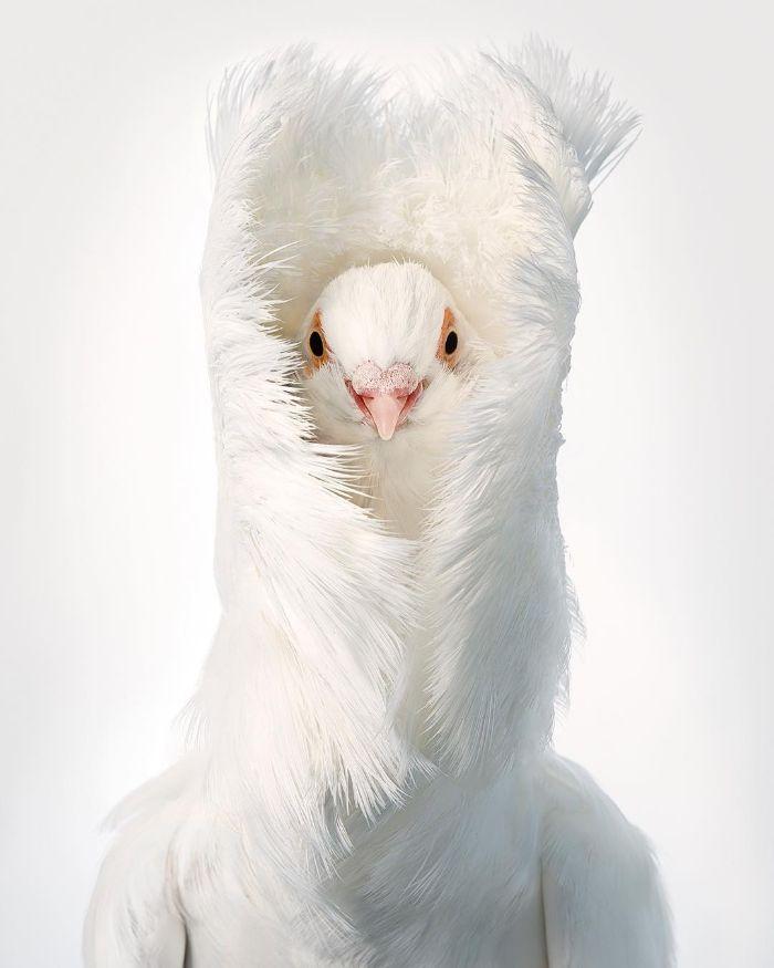 endangered photo portraits birds tim flach 1 7 5fae3a5f01b50 700 - Aqui estão 10 incríveis pássaros raros ameaçados de extinção